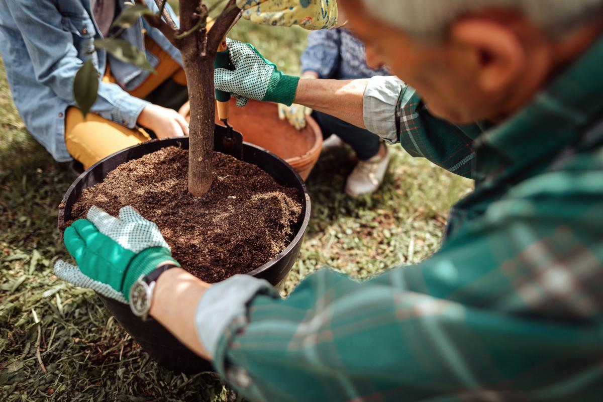 - Comment planter un arbre en permaculture ?