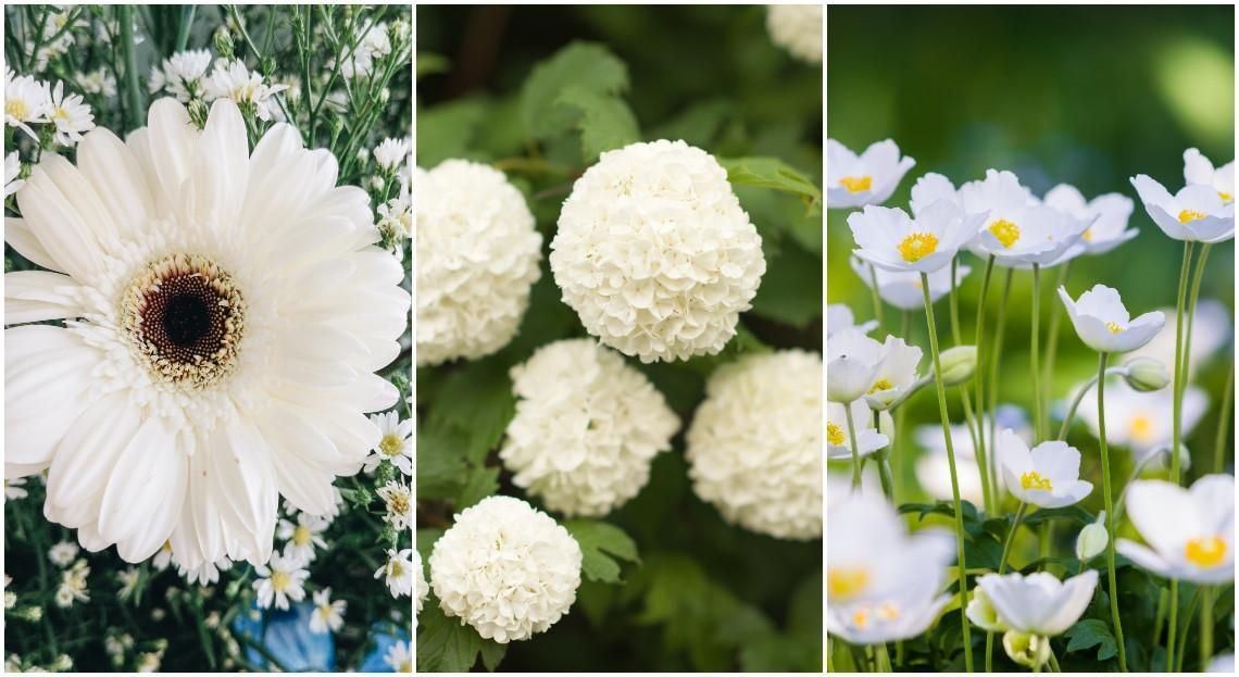 - Top 12 des plus belles fleurs blanches à cultiver au jardin